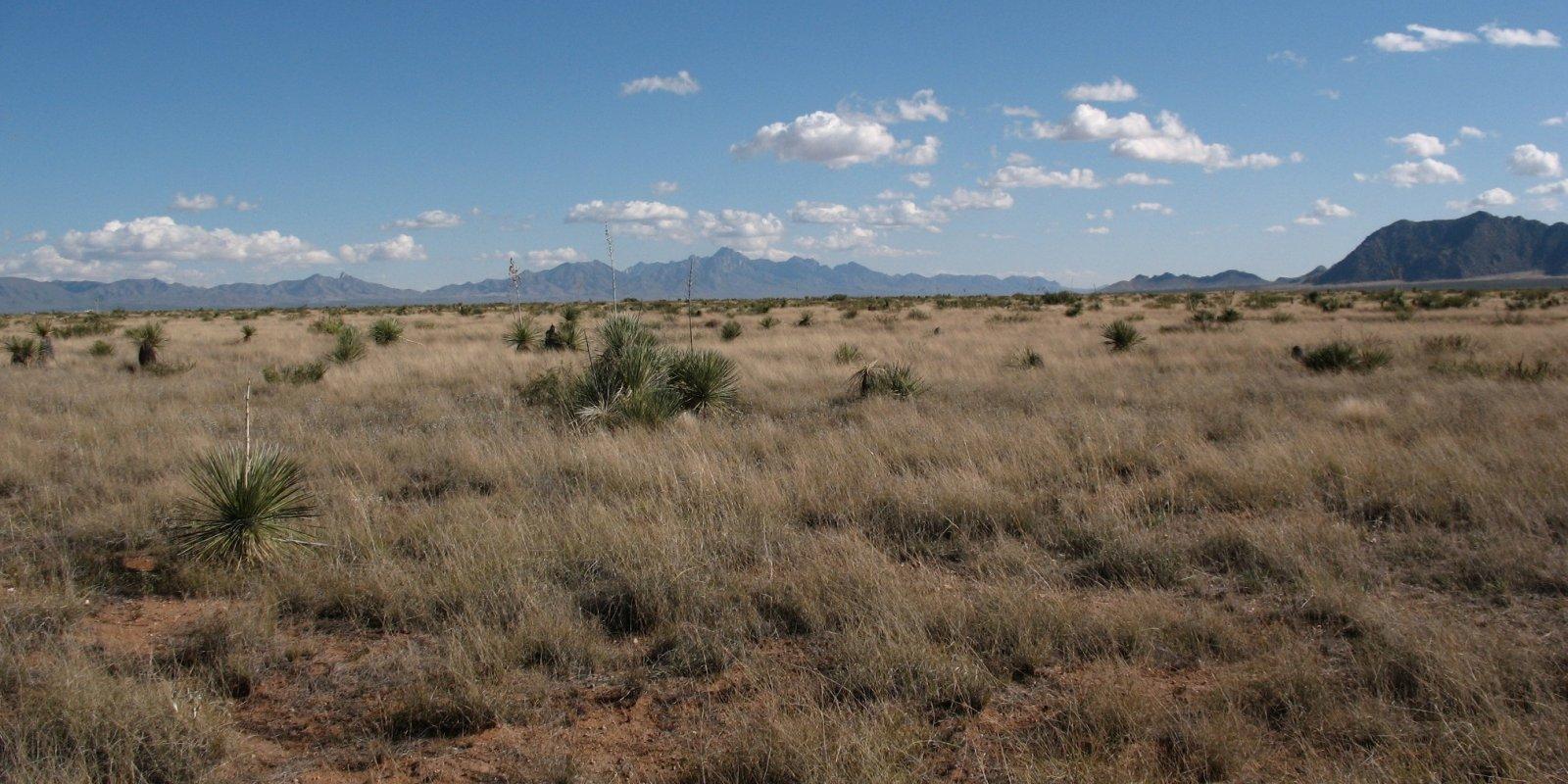 Jornada Basin