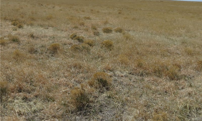 Midgrass-shortgrass community