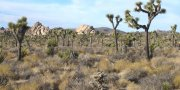 Mojave Desert