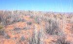 Deep sand, SPGI2, El Paso, TX