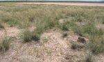 Saline_grassland_SaltFlats_SPAI_c